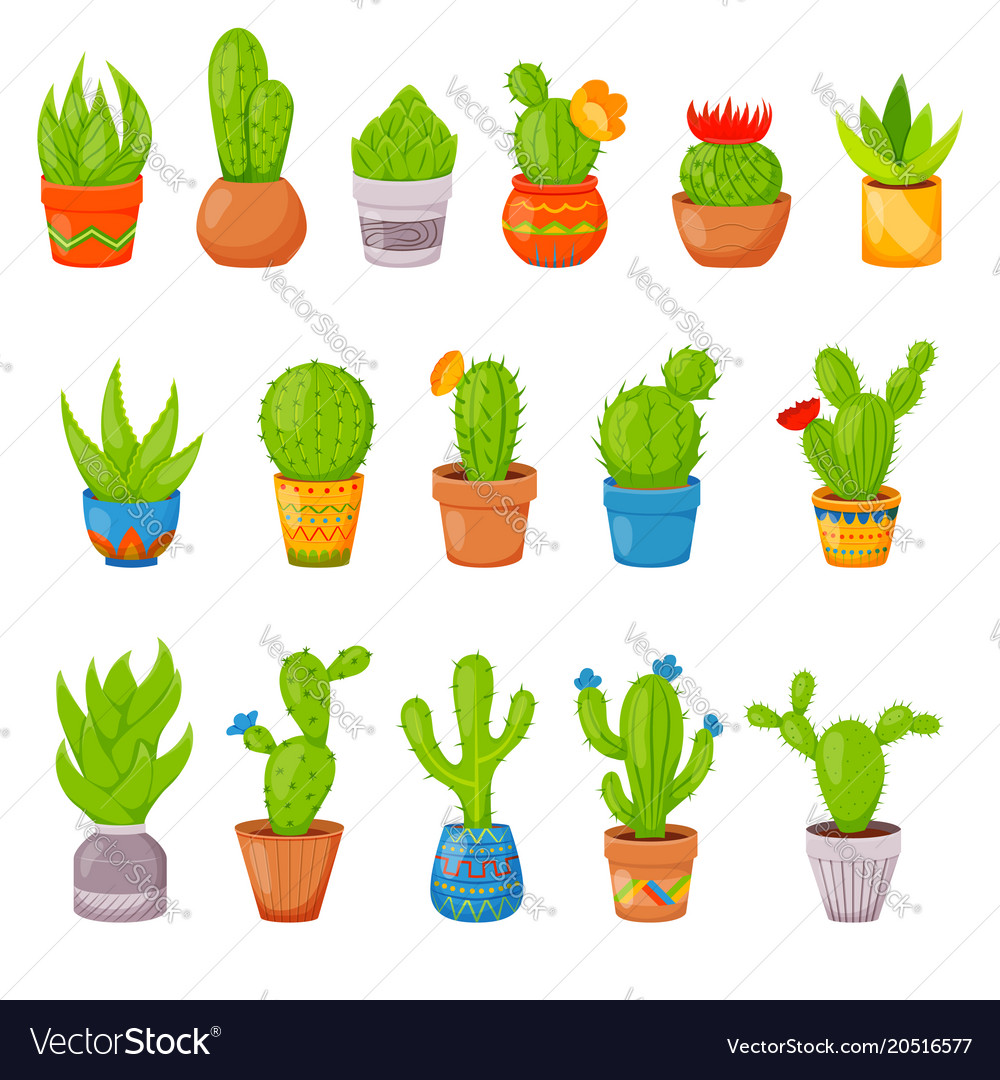 Set of 16 cactuses and succulents in flower pots vector image