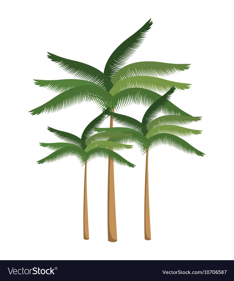 Palm tree beach design isolated vector image