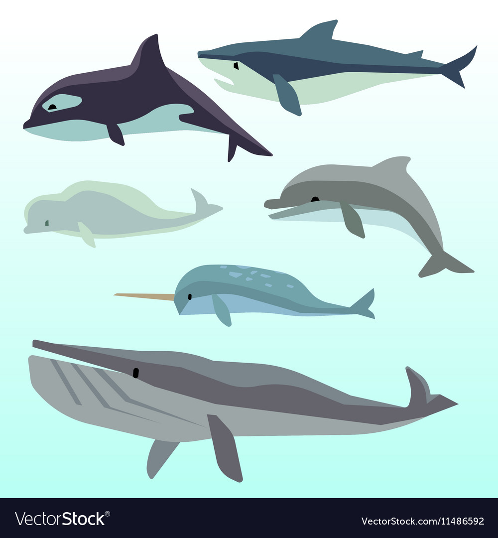 Whales and dolphins marine underwater mammal