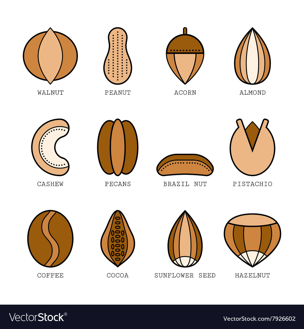 Set of flat colored icons with different nuts