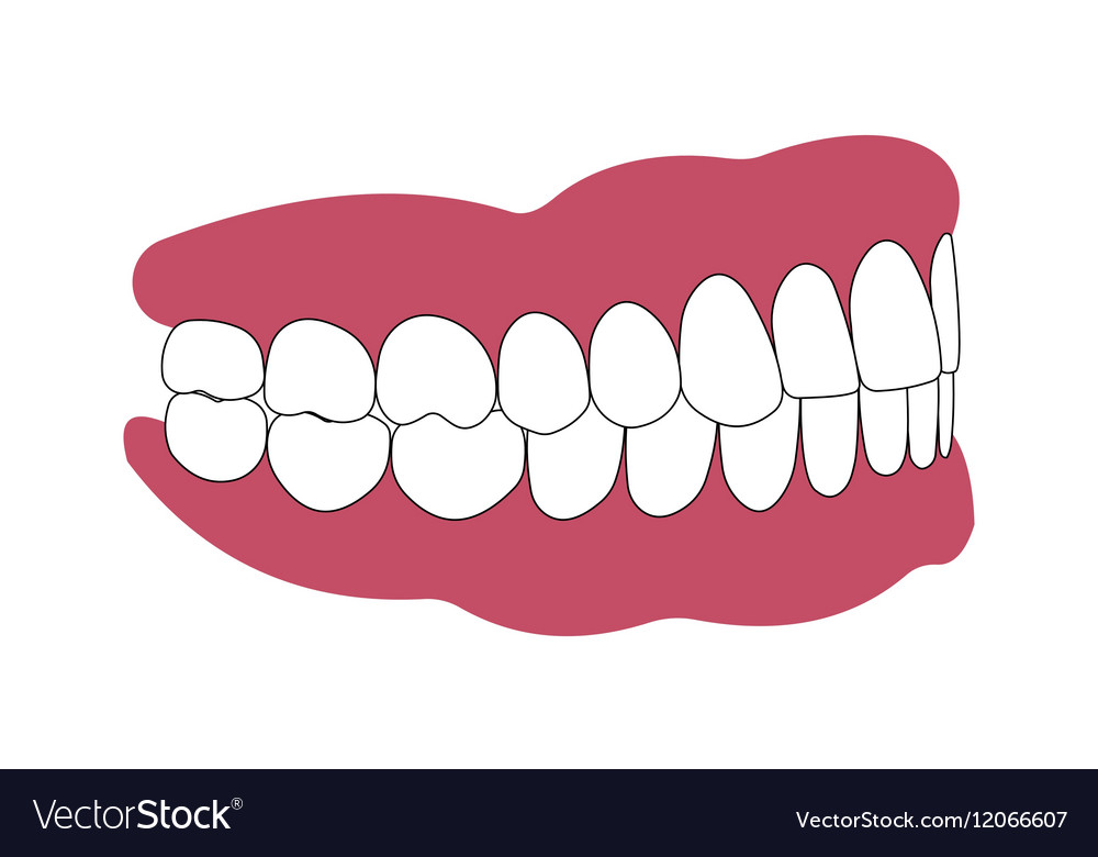 Teeth and gums person