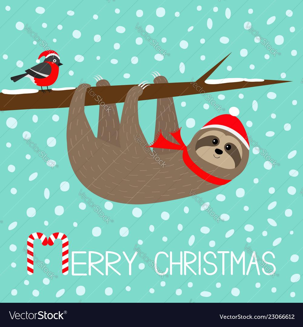 Christmas Sloth.Merry Christmas Sloth Hanging On Rowan Rowanberry