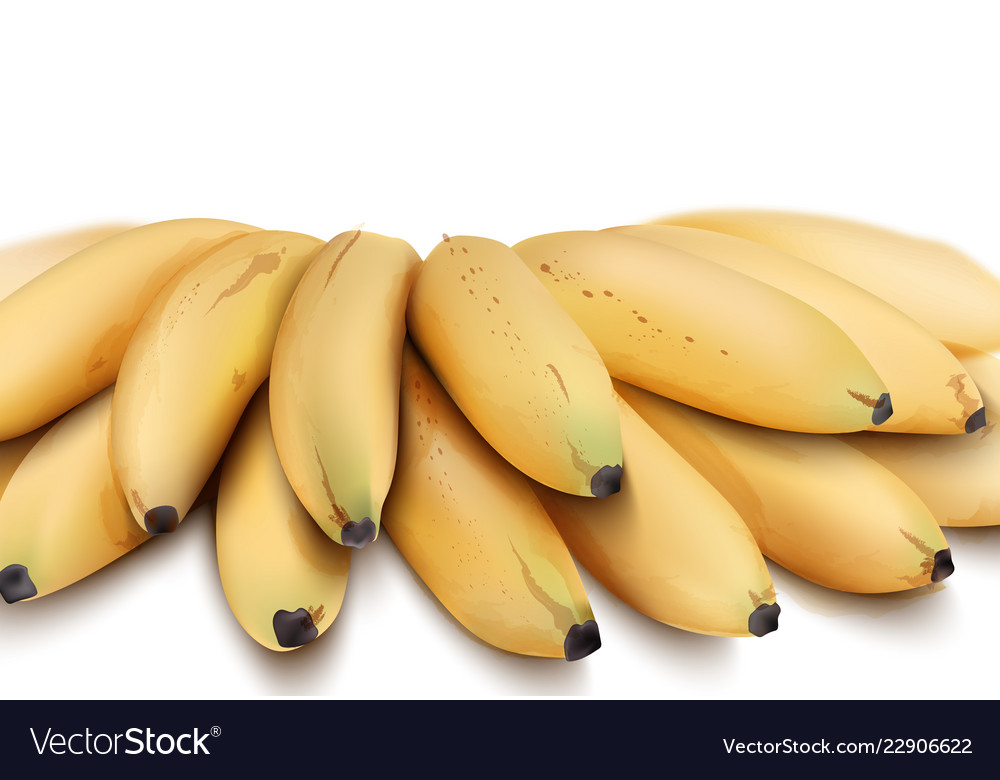 Bananas isolated watercolor style exotic