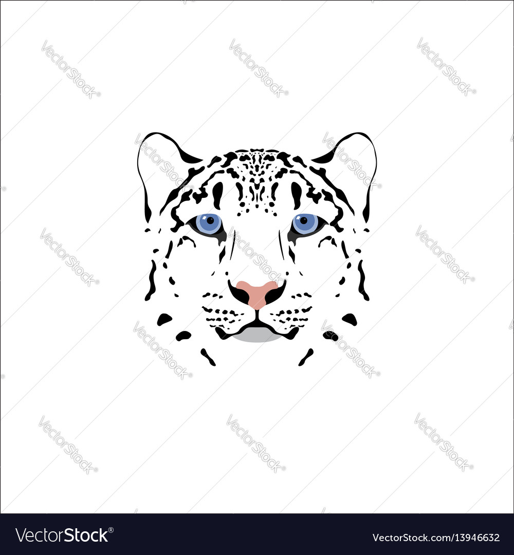 A snow leopard head