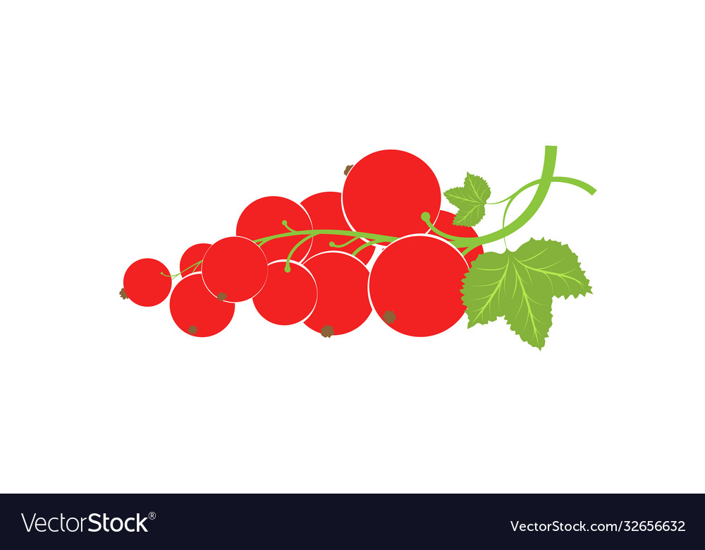 A sprig with redcurrant berries large fresh red