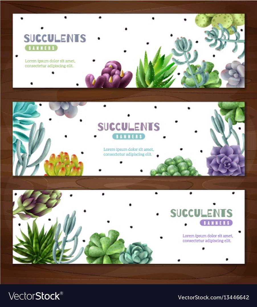 Succulent plants horizontal banners