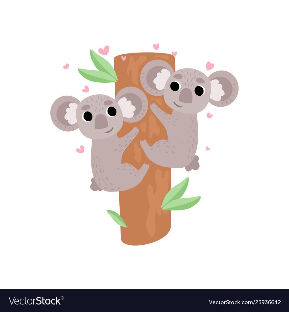 Two cute baby koala bears climbing tree lovely