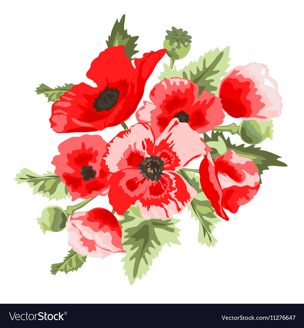 Poppy Floral Bouquet Royalty Free Vector Image