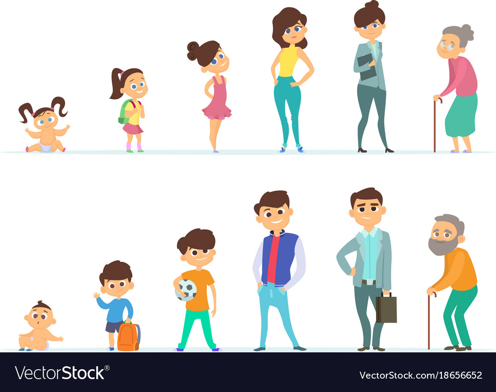 Life cycle of male and female different vector image