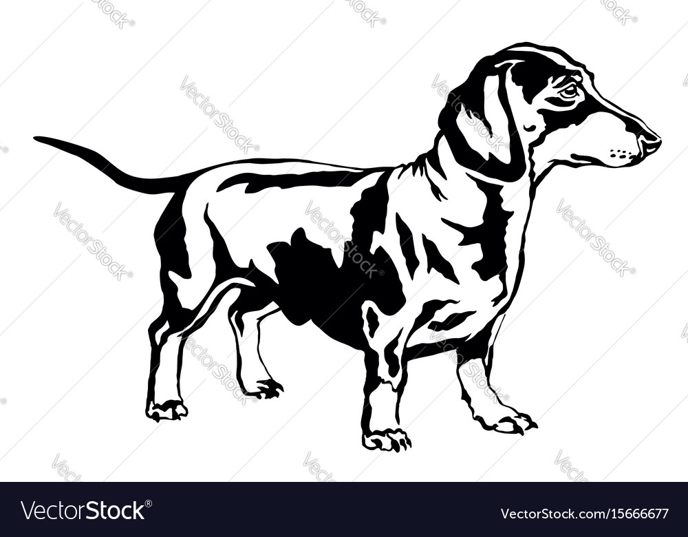 Decorative standing portrait of dog dachshund