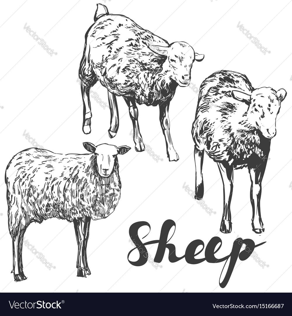 Sheep set hand drawn realistic