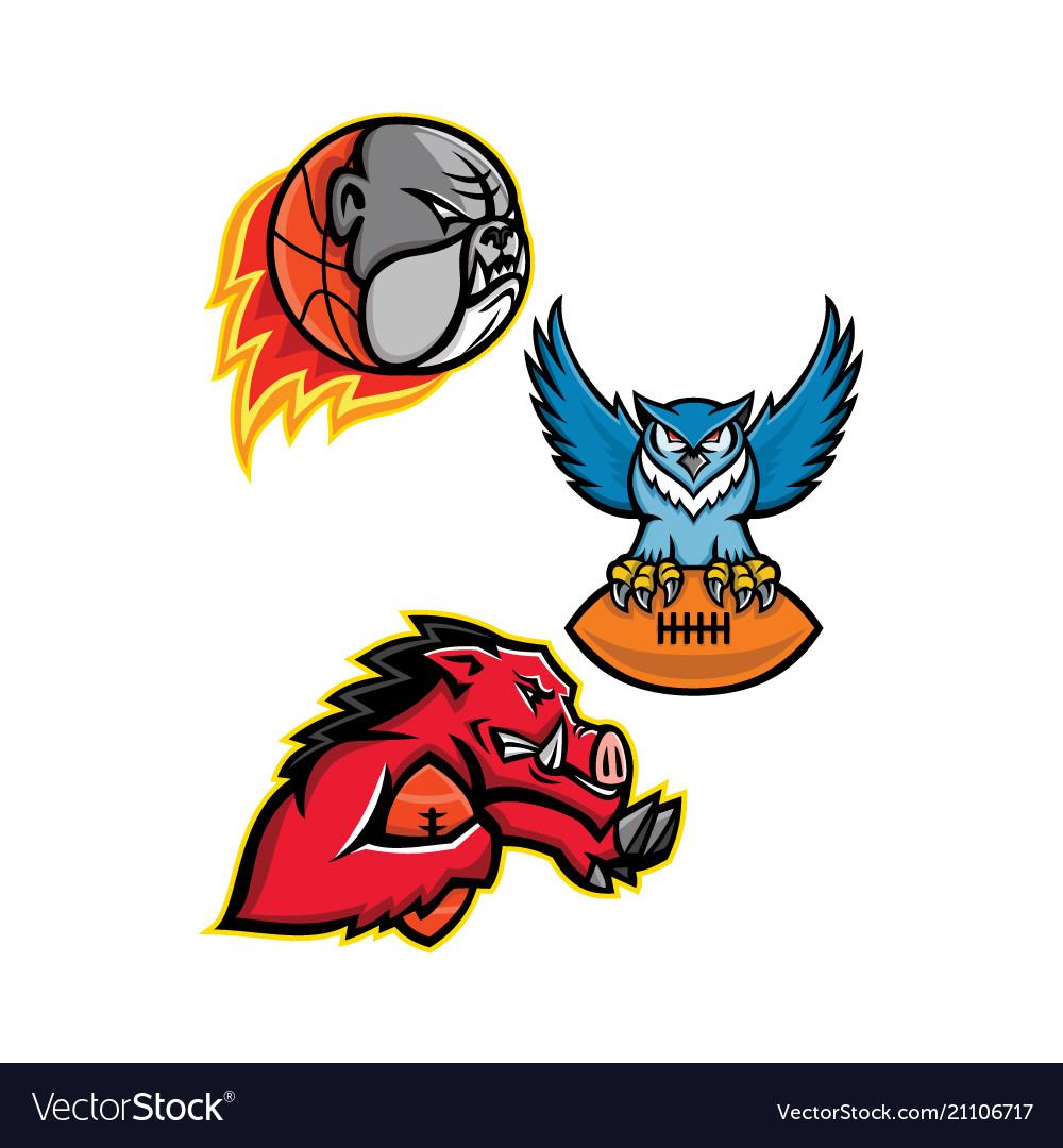 American football and basketball wildlife sports
