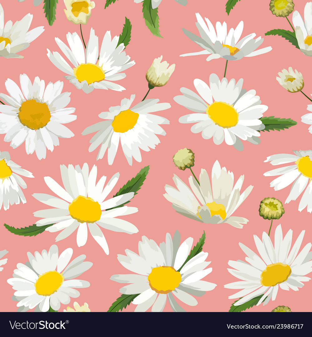 Floral seamless pattern with chamomile flowers vector