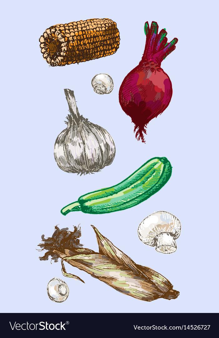 Digital detailed color vegetable hand drawn