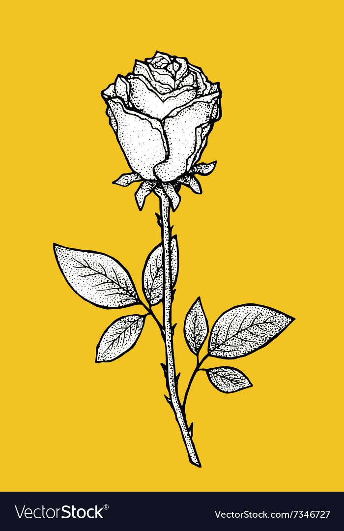 Rose Art for t-shirt design vector image