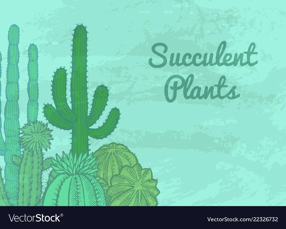 Cacti plants background