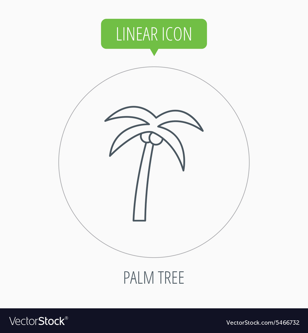 Palm tree icon Travel or vacation symbol