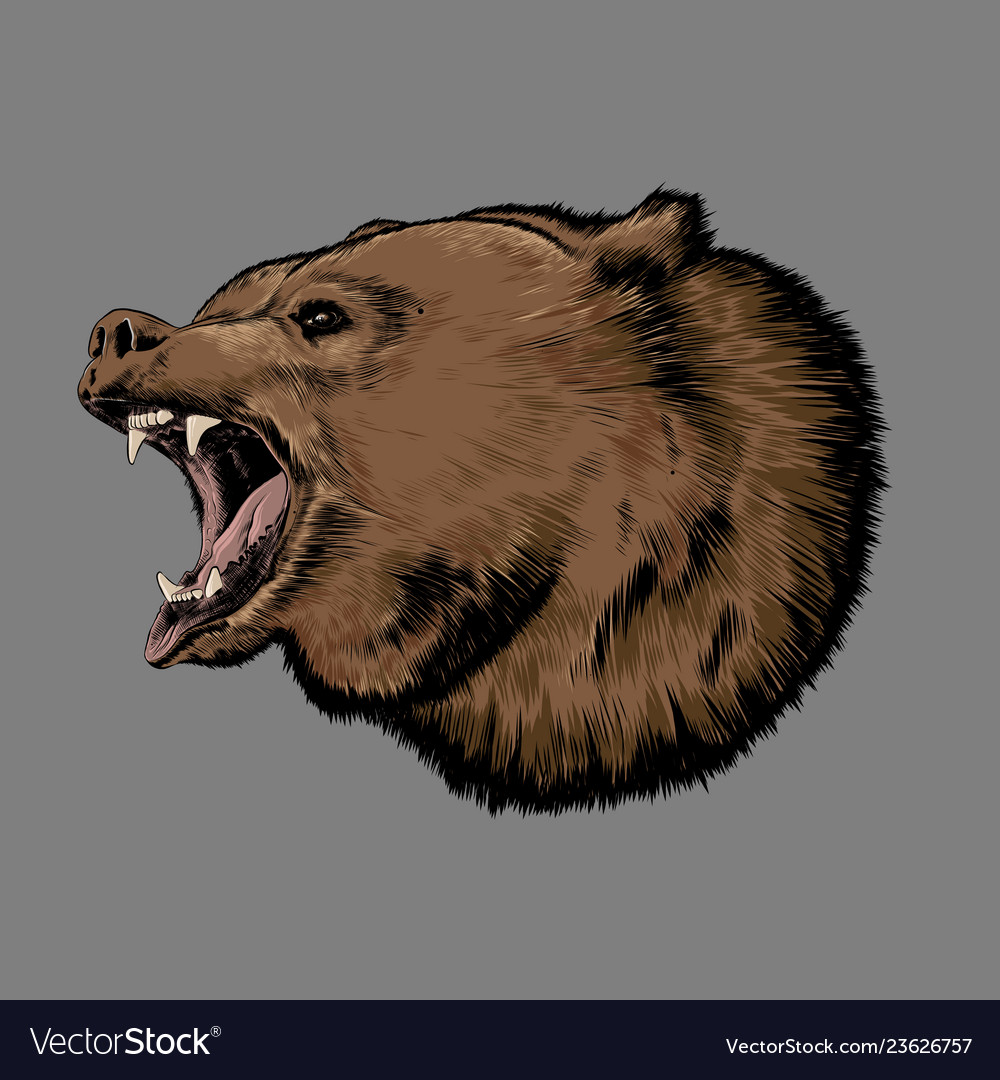 Hand drawn sketch of bear in color isolated on