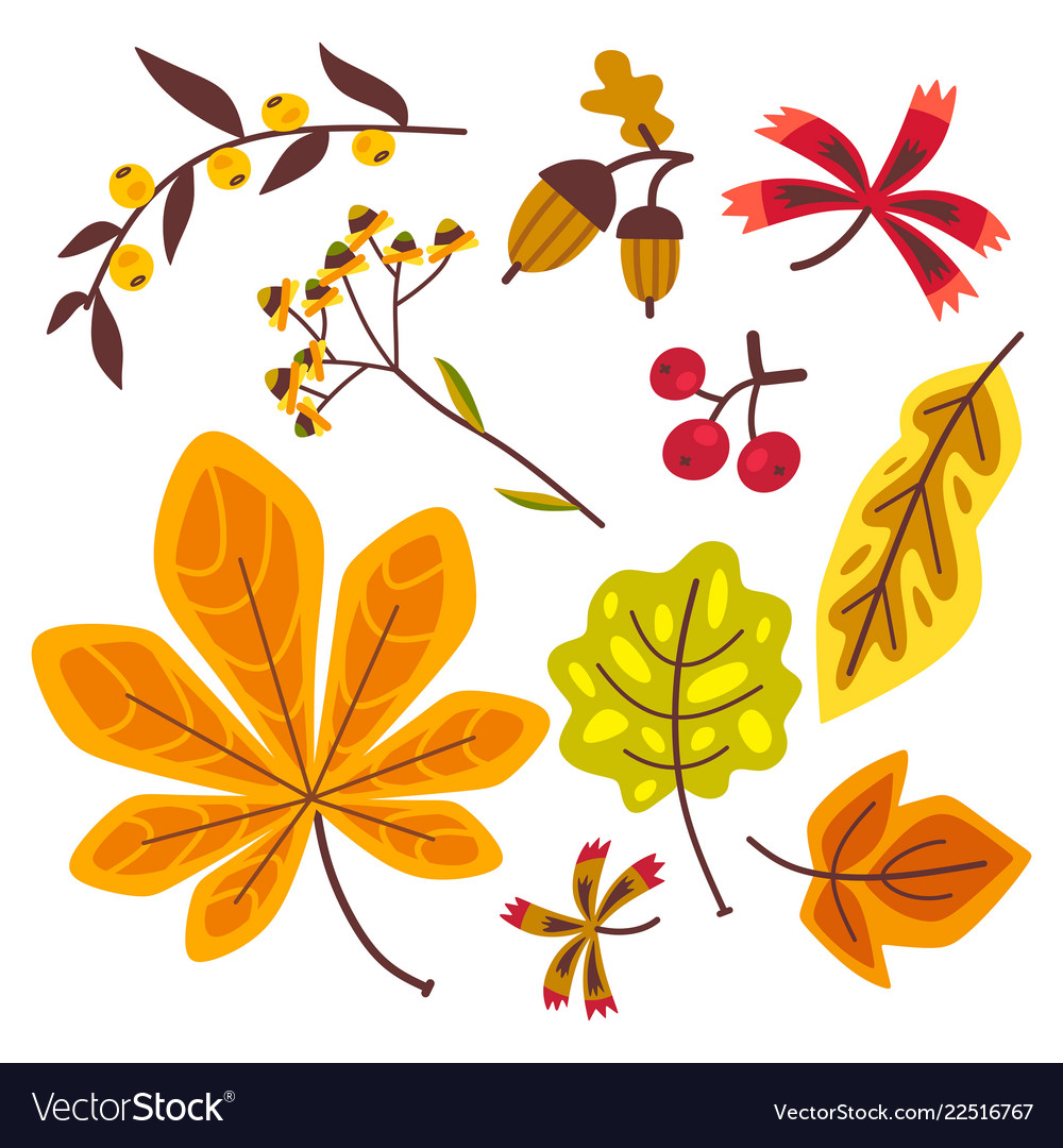 Autumn floral set with leaves of oak leaves maple