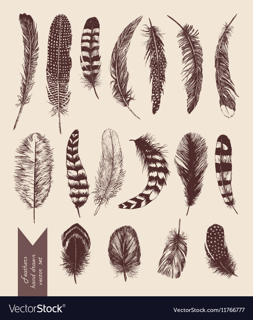 Hand drawn vintage set with feathers