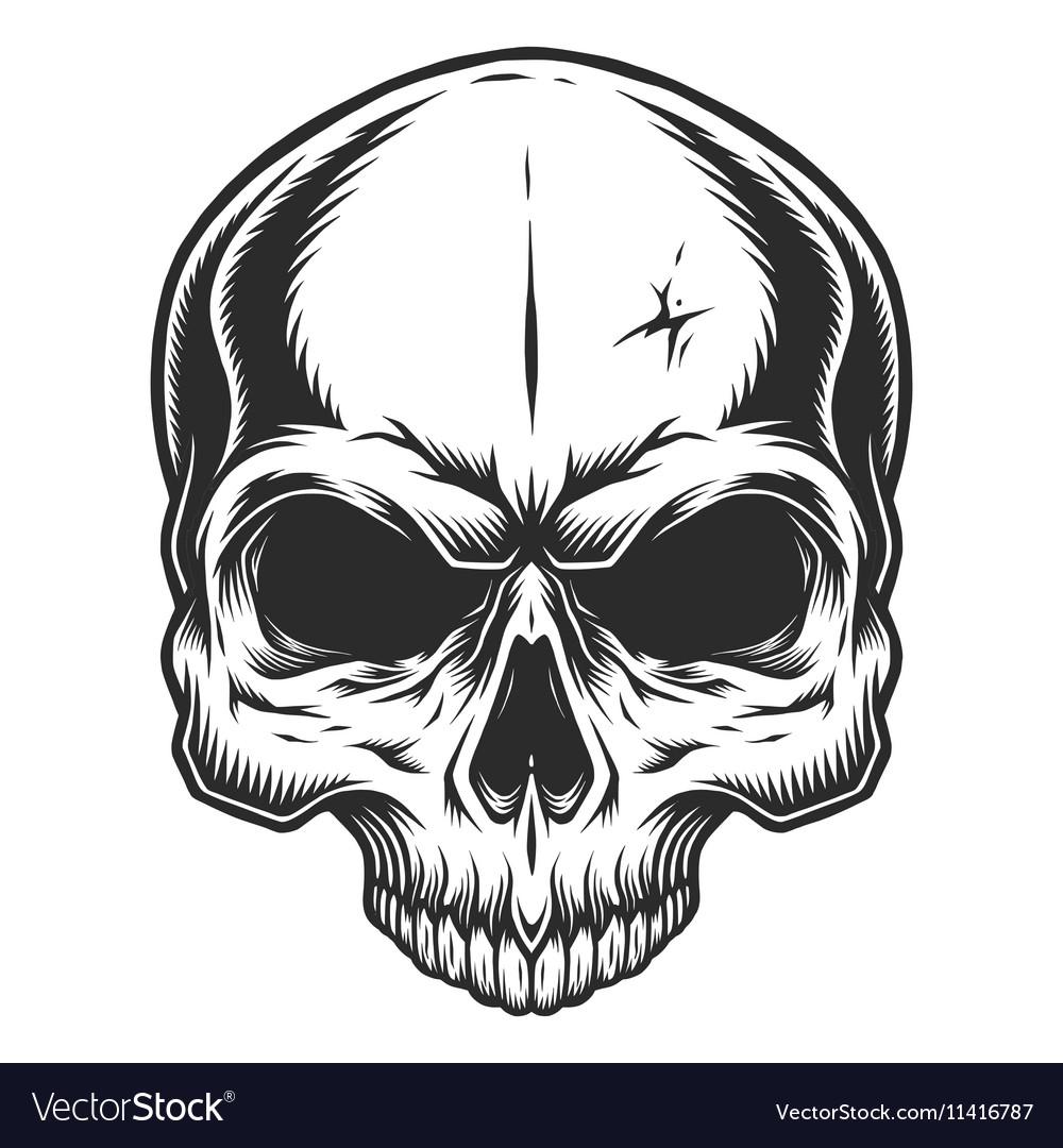 monochrome of skull royalty free vector image vectorstock rh vectorstock com skull vector image skull vector art