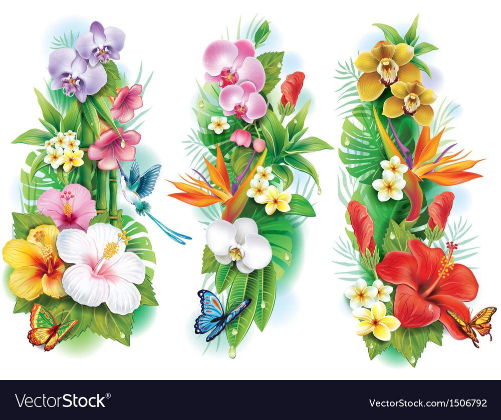 Arrangement from tropical flowers and leaves vector image izmirmasajfo