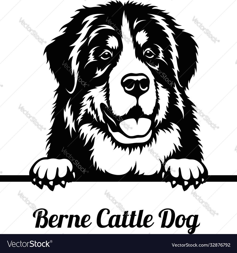 Berne cattle dog - peeking dogs - breed face head