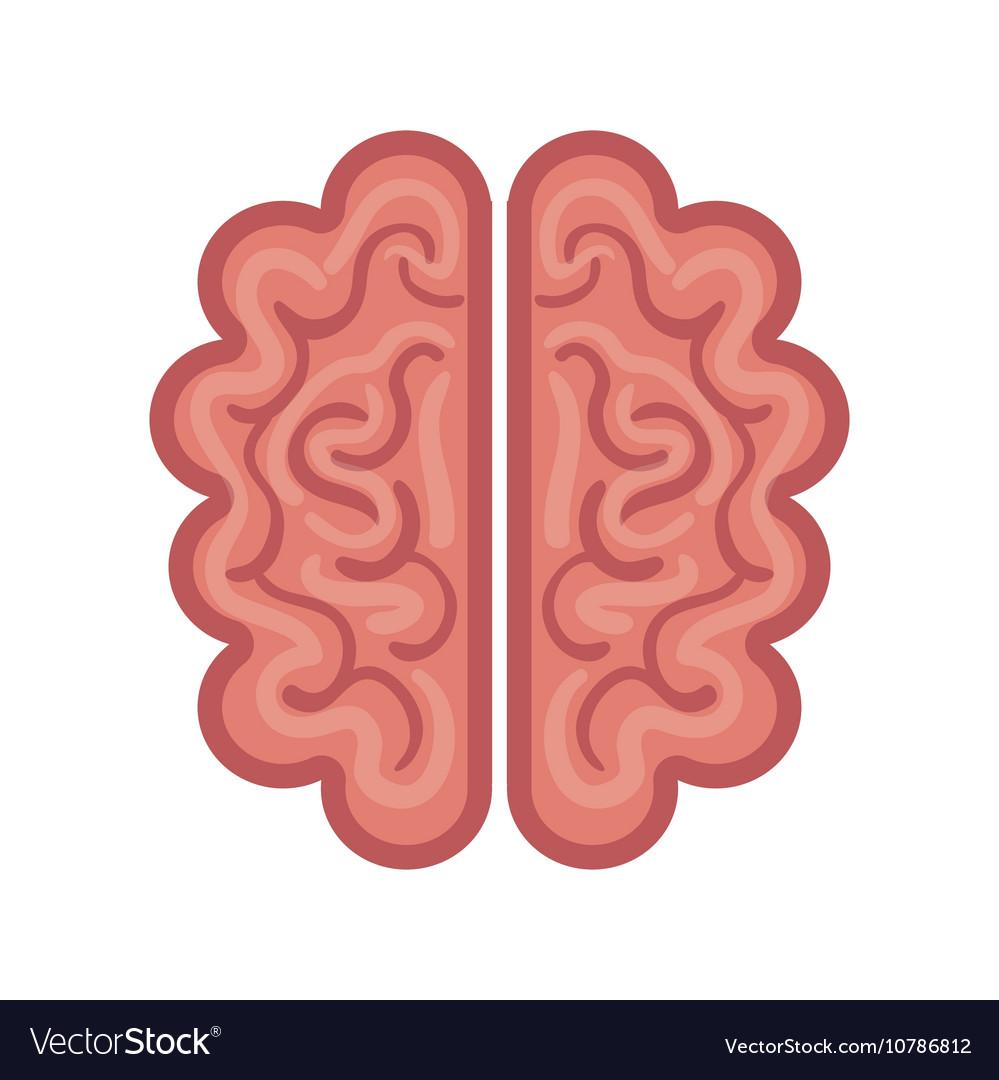 Brain cartoon icon graphic isolated