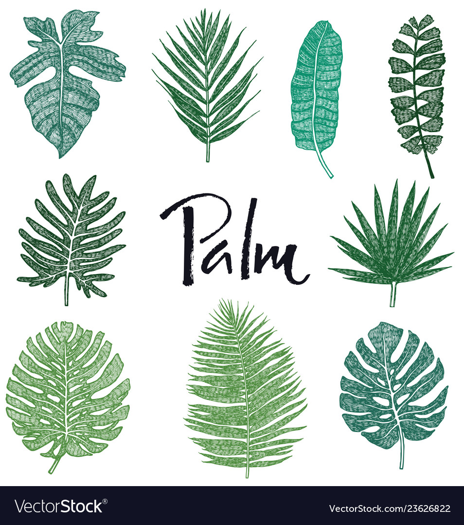 Set Green Palm Leaves Hand Drawing Isolated Object Pikbest has 3796 tropical leaves design images templates for free. vectorstock