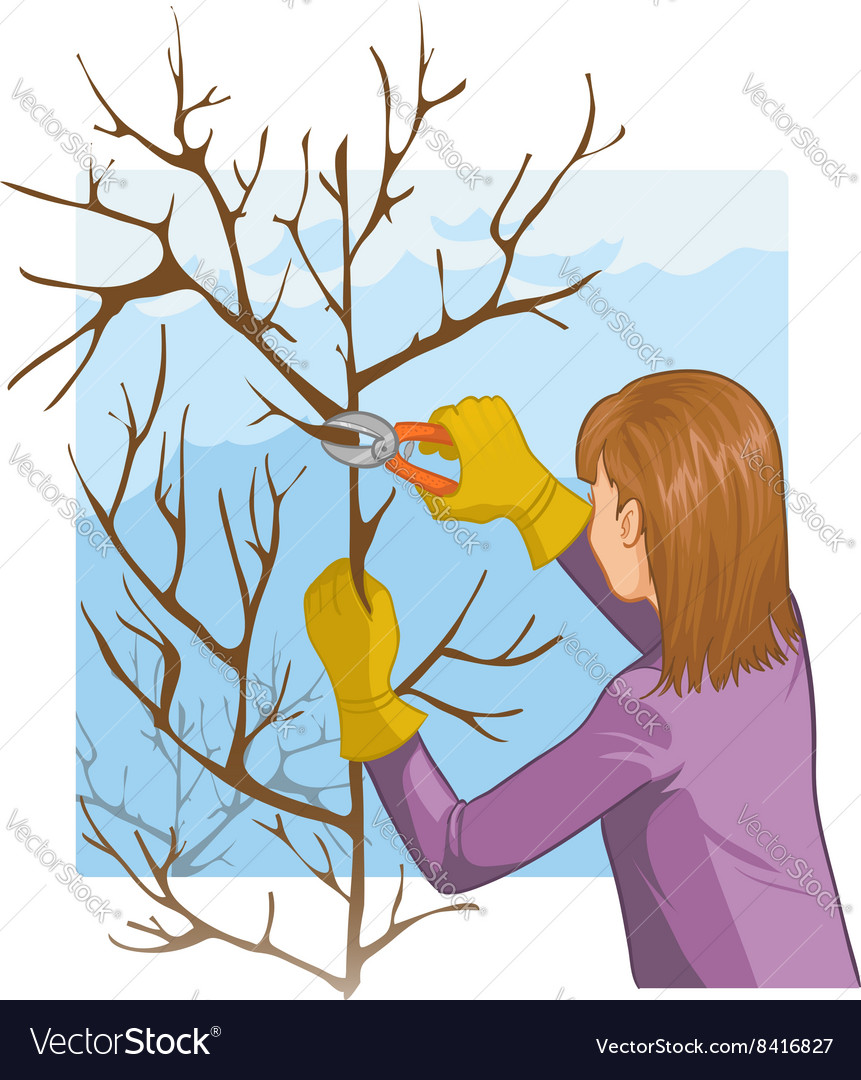 Young woman trimming a tree with garden clippers