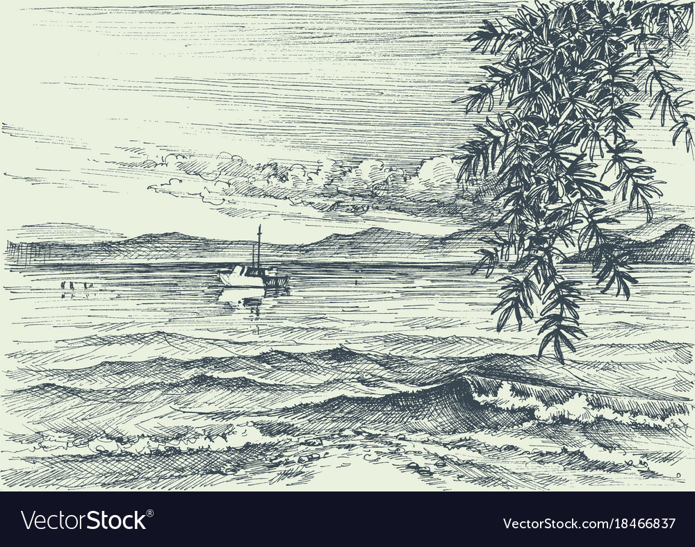 Calm sea view etching an olive tree on shore vector image