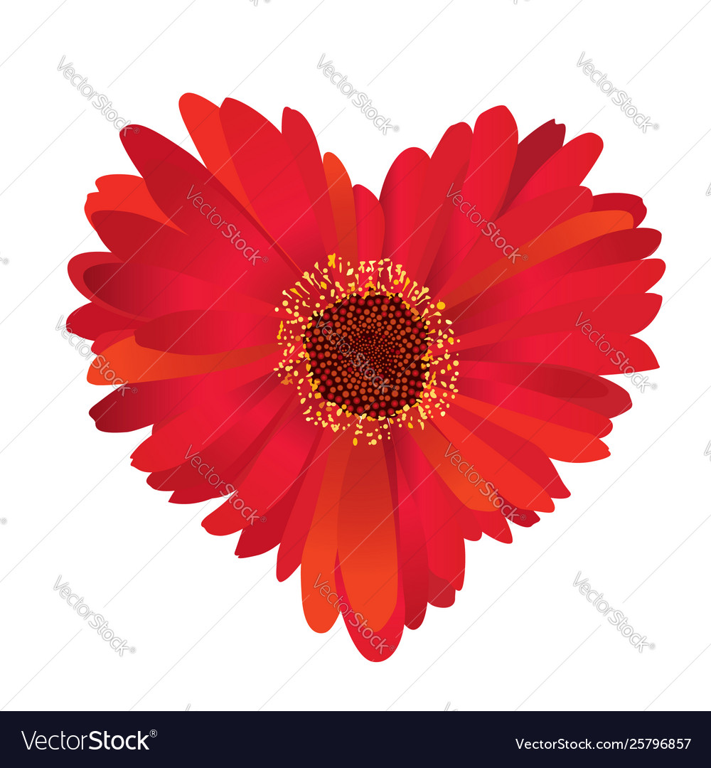 Red flower with love heart shape