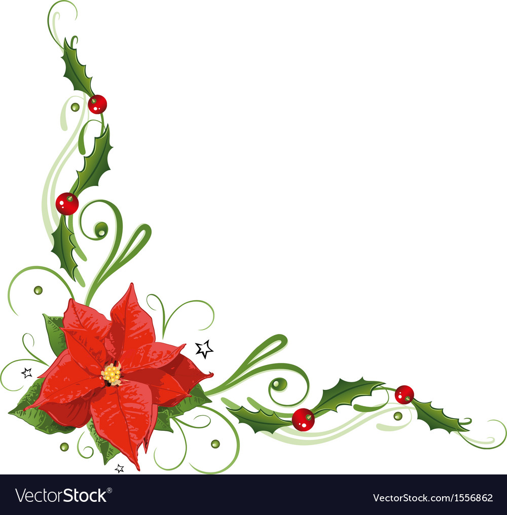 Poinsettia holly