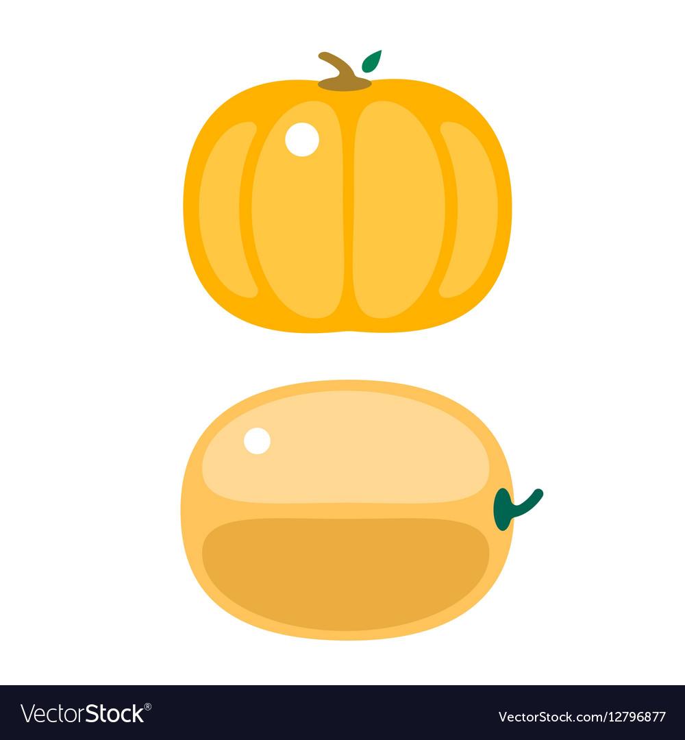 Fresh orange pumpkin isolated vector image