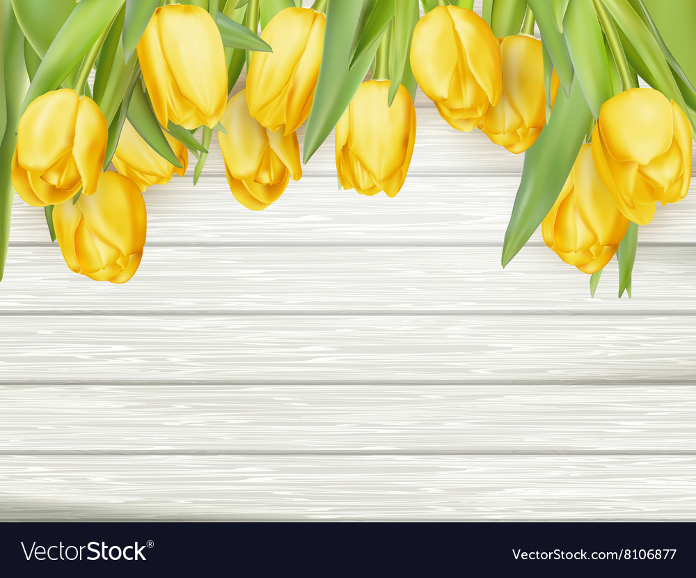 Yellow tulips EPS 10