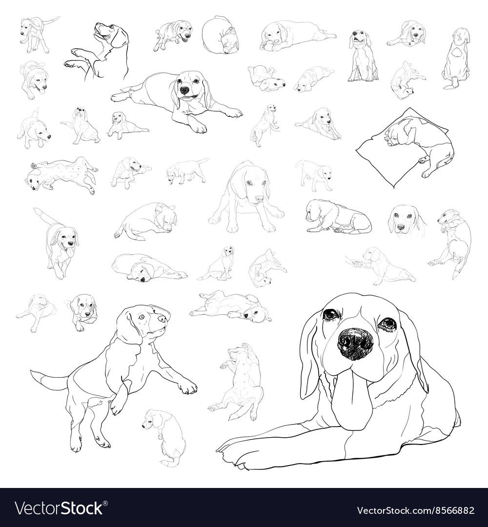 Drawing set of adorable beagle dog