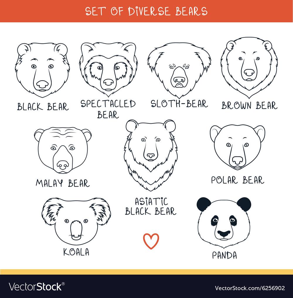 Set 9 muzzles bears handmade in linear style Bear