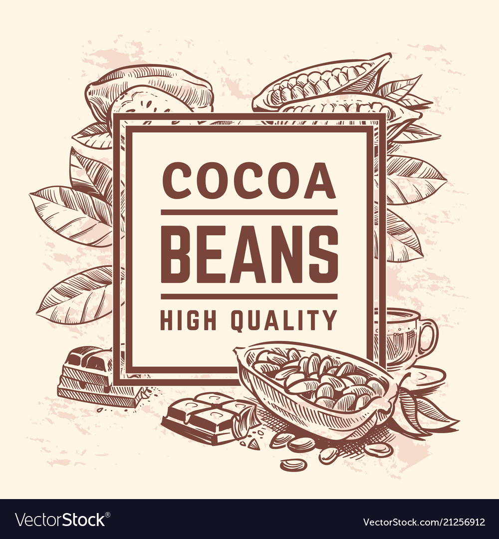 Cocoa plant with leaves cacao tree background