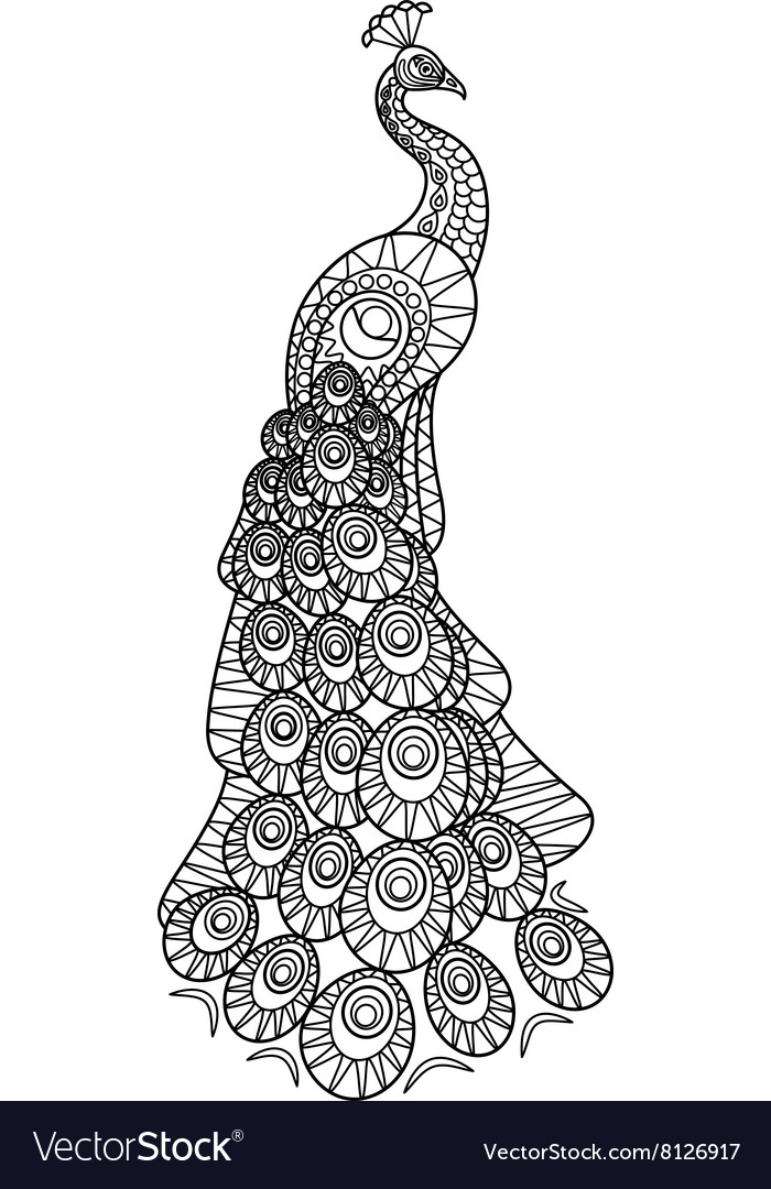 Hand drawn Peacock