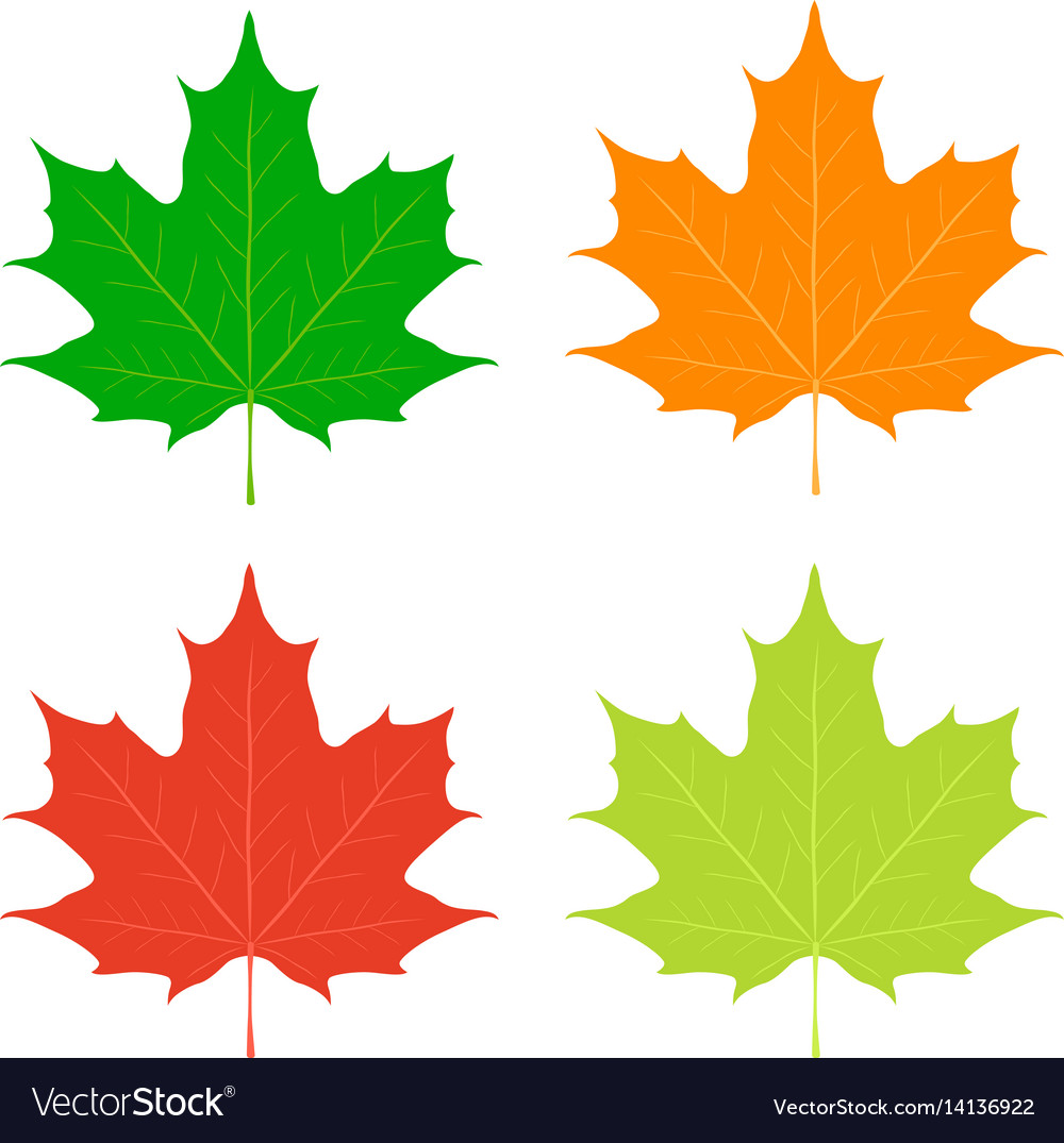Maple Leaves Canada Symbol Flat Style Royalty Free Vector