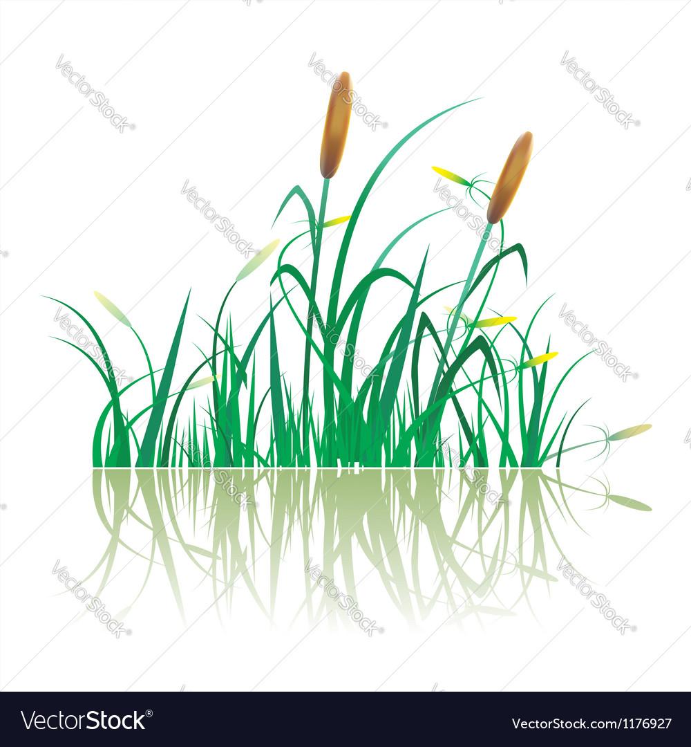 Closeup of sugar cane plantation vector image