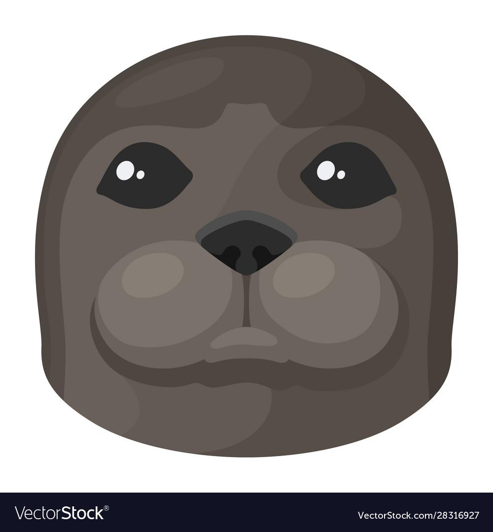 Sea calf seal head cute marine animal