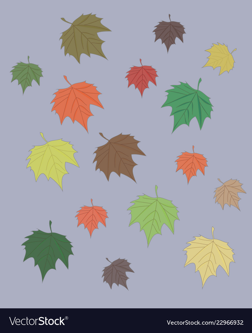 Colorful maple leaves set isolated on gray autumn