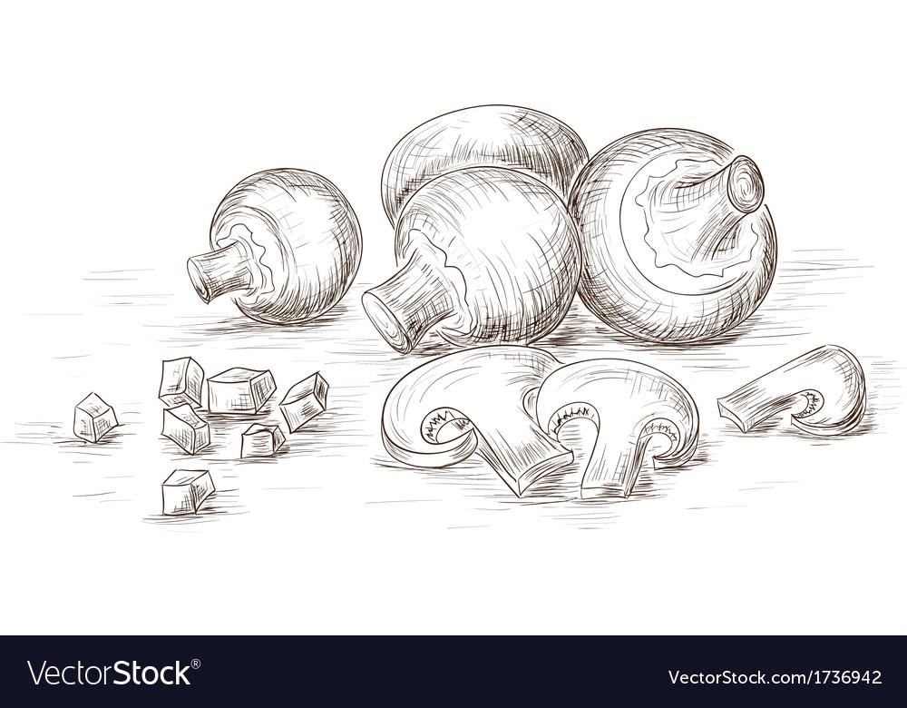 Hand drawn mushrooms