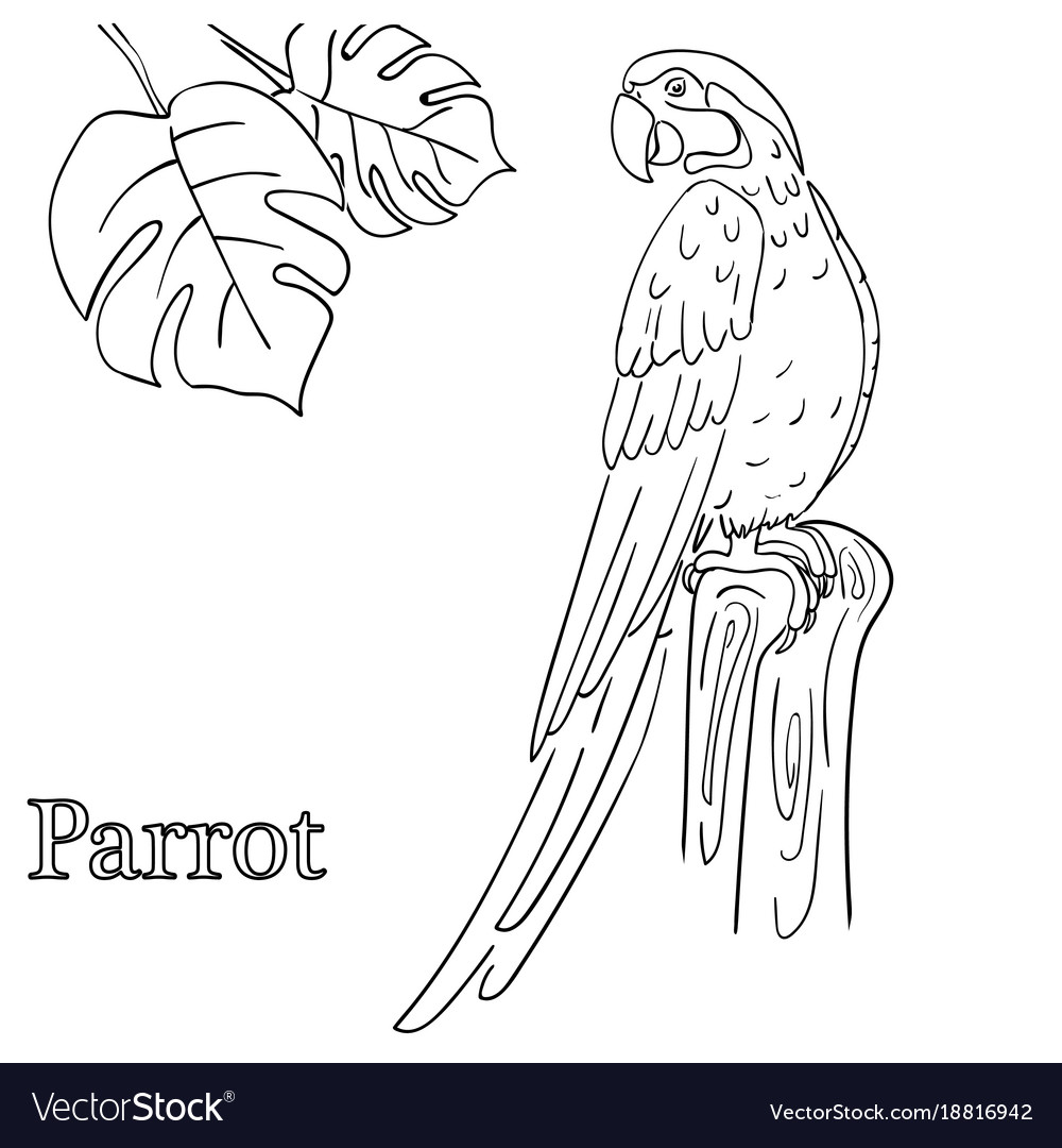 Parrot coloring pages for children eps 10