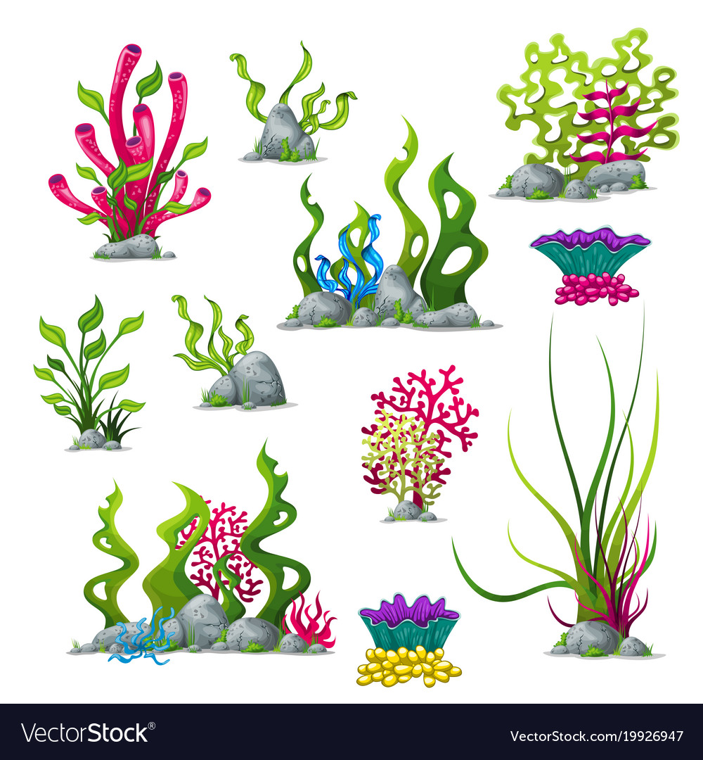 Set Of Different Underwater Plants Royalty Free Vector Image
