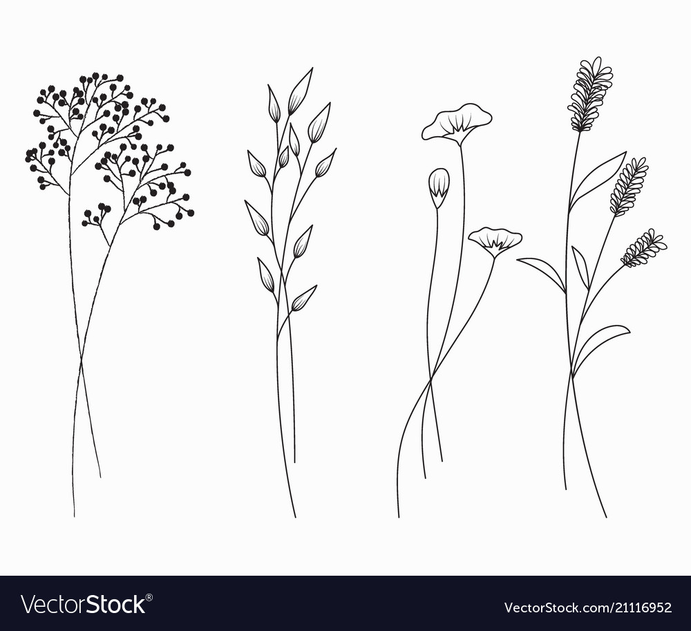 Hand drawn of wildflowers set isolated on white