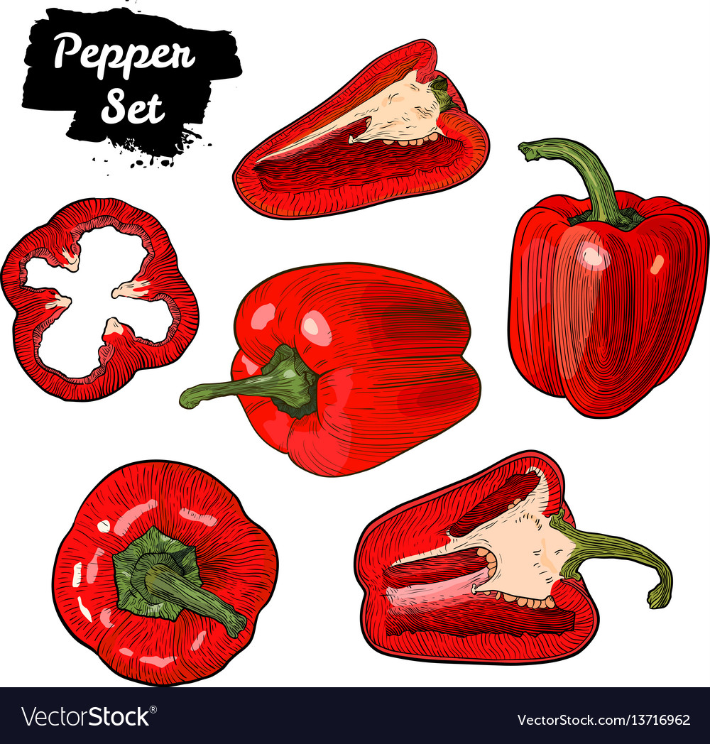 Hand drawn sketch style bell pepper set isolated vector image