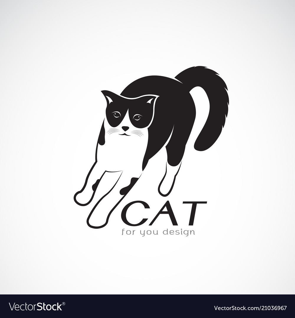 A cat on white background pet animals