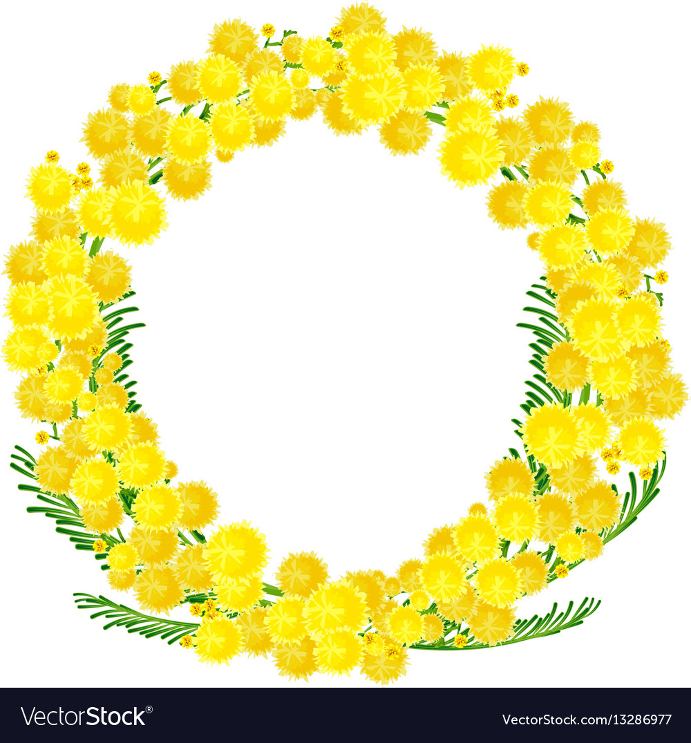 Wreath of yellow acacia flowers twigs royalty free vector wreath of yellow acacia flowers twigs vector image mightylinksfo